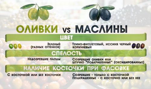 Маслины: лечебные свойства