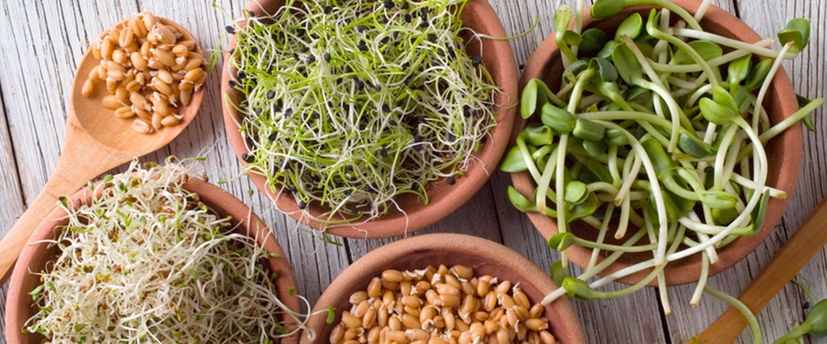 Проростки: лечебные свойства